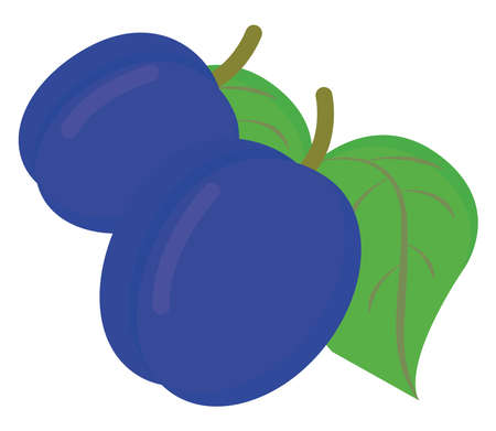 Blue plum, illustration, vector on white background. 向量圖像
