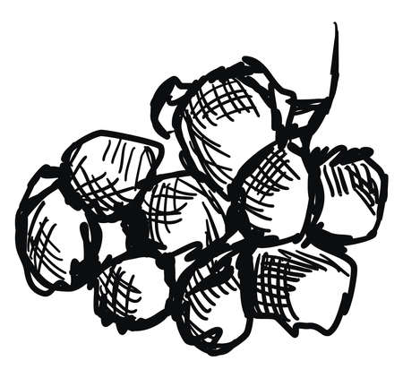 Grapes sketch, illustration, vector on white background.