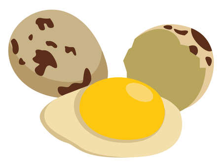 Quail eggs, illustration, vector on white background.