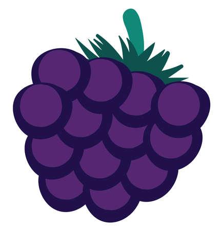 Blackberry flat, illustration, vector on white background.