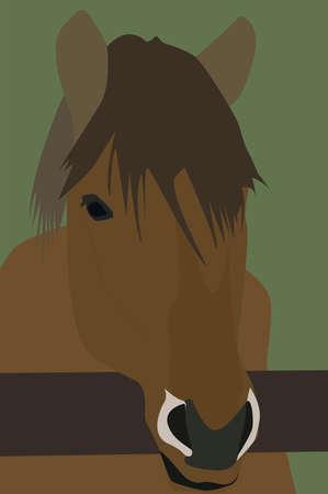 Horses head, illustration, vector on white background. 向量圖像