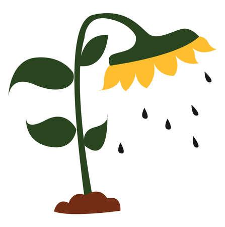 Sunflower seeds, illustration, vector on white background.
