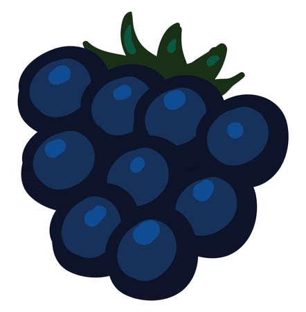 Flat blackberry, illustration, vector on white background. Ilustração