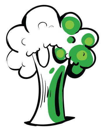 Broccoli drawing, illustration, vector on white background.