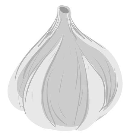 Flat garlic, illustration, vector on white background.