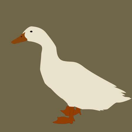 White goose, illustration, vector on white background.