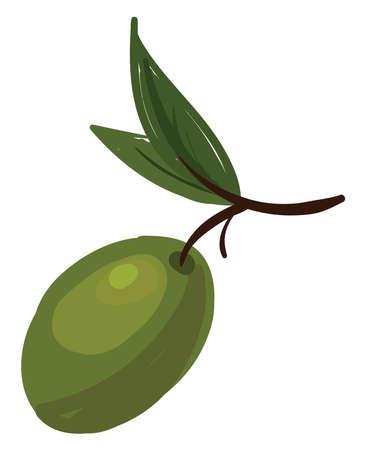 Green olive, illustration, vector on white background.