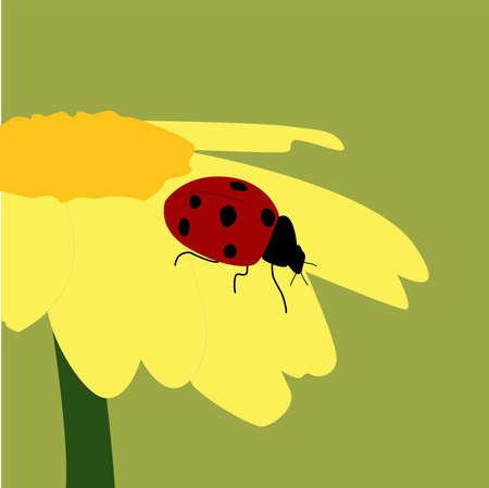 Ladybug on flower, illustration, vector on white background.