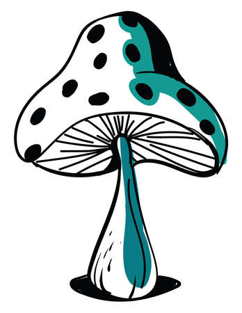 Drawing of a mushroom, illustration, vector on white background.