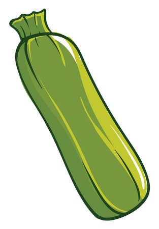 Interesting zucchini, illustration, vector on white background. Ilustracja