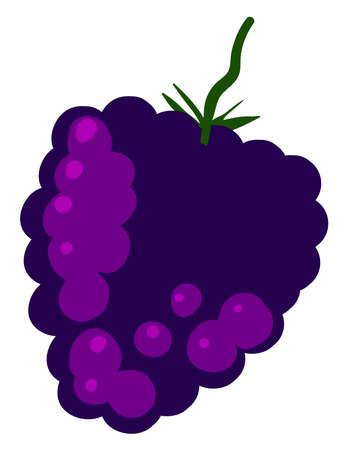 Fresh mulberry, illustration, vector on white background.