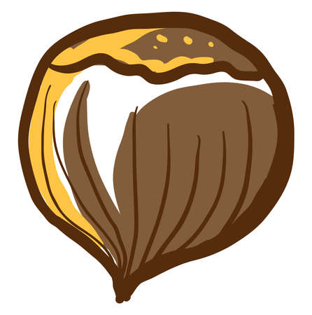 Hazelnut drawing, illustration, vector on white background. 일러스트
