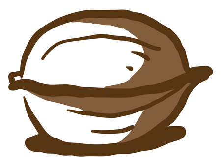 Walnut drawing, illustration, vector on white background.