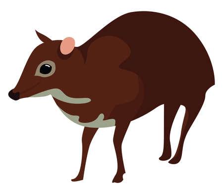 Java mouse deer, illustration, vector on white background