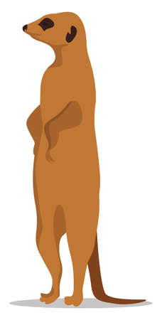 Meerkat animal, illustration, vector on white background Illustration