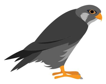 Predatory bird, illustration, vector on white background