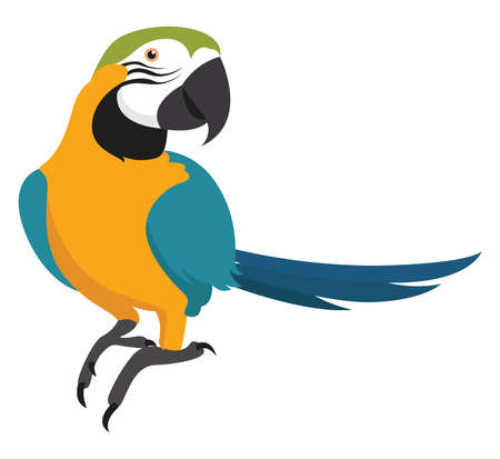 Yellow parrot, illustration, vector on white background