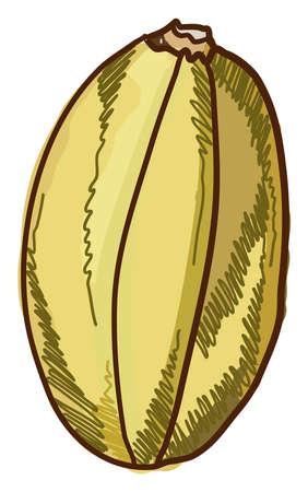 Spagetti squash pumpkin, illustration, vector on white background