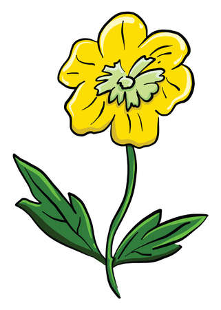 Yellow buttercup , illustration, vector on white background
