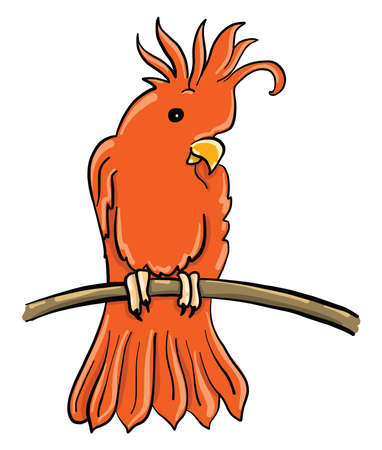 Red cockatoo , illustration, vector on white background