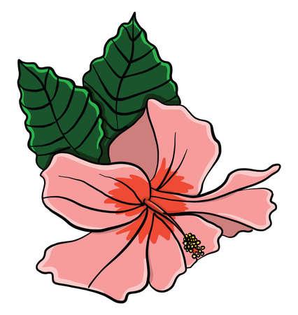 Hibiscus flower , illustration, vector on white background