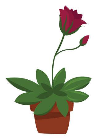 Home plant , illustration, vector on white background