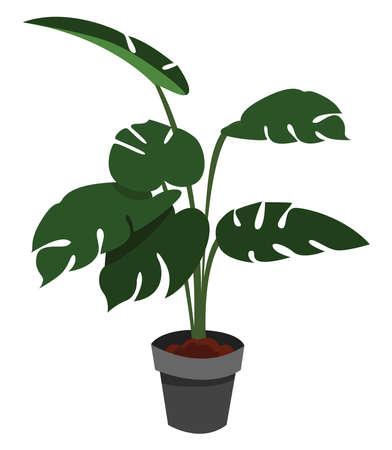Home plant tree , illustration, vector on white background 向量圖像