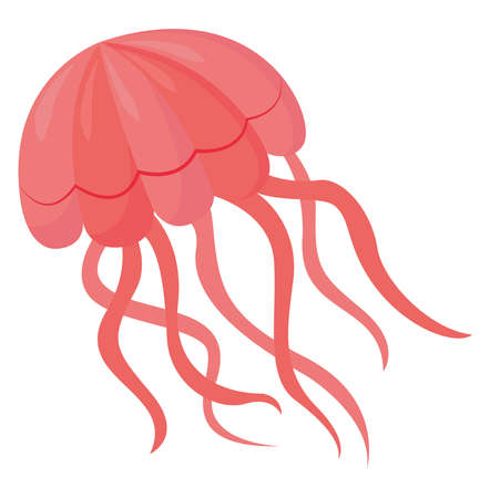 Pink jelly fish , illustration, vector on white background