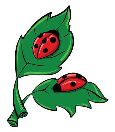 Ladybugs on leaves , illustration, vector on white background 向量圖像
