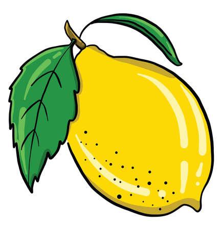 Yellow lemon , illustration, vector on white background 向量圖像