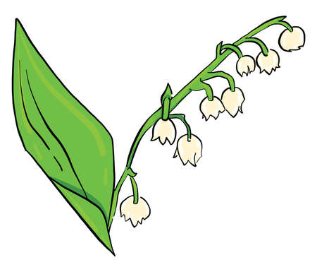Lily of the valley , illustration, vector on white background 向量圖像