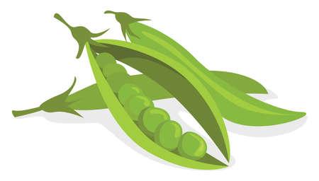 Peas beans , illustration, vector on white background Illustration