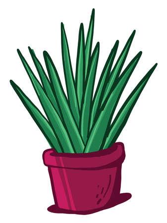 Yucca in pot , illustration, vector on white background Illustration