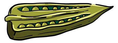 Green peas, illustration, vector on white background Illustration