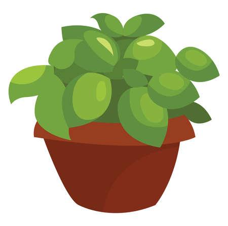 Basil plant, illustration, vector on white background Stock Illustratie