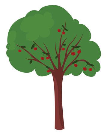 Cherry tree, illustration, vector on white background