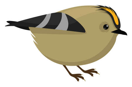 Goldcrest bird, illustration, vector on white background