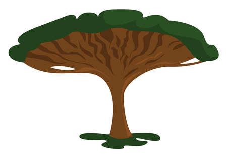 Dragon tree, illustration, vector on white background Illustration