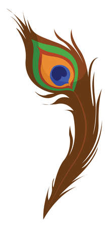 Peacock feather, illustration, vector on white background