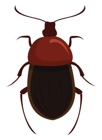 Silphidae, illustration, vector on white background Illusztráció