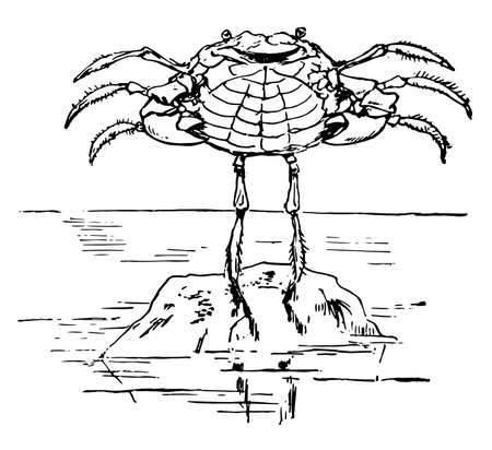 A crab dancing on a rock, this scene shows a crab dancing on a rock with its arms spread out, vintage line drawing or engraving illustration