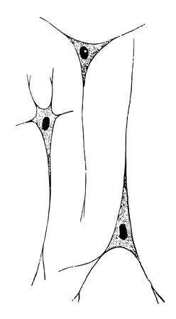 Nerve cells are the second principal element for nervous tissue, vintage line drawing or engraving illustration.