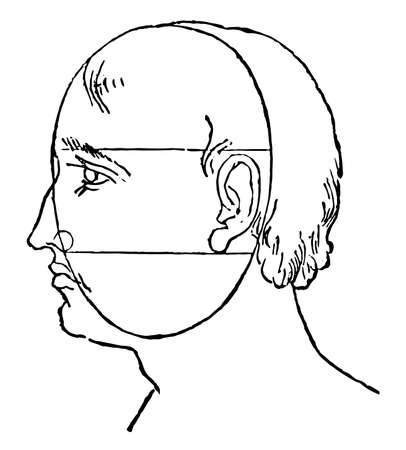 Face Perspective is simplify the head into its basic forms, it is drawn realistically is drawing with the laws of perspective, vintage line drawing or engraving illustration.