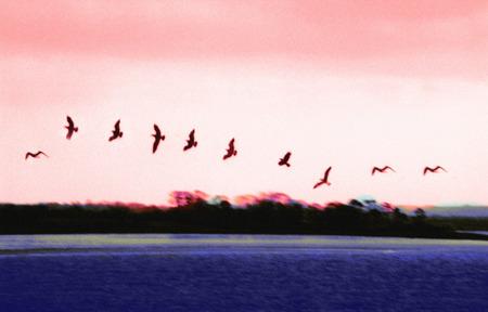blackwater: digital art Stock Photo