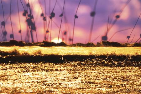kerry: golden waves