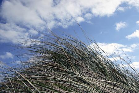 kerry: grass mountain