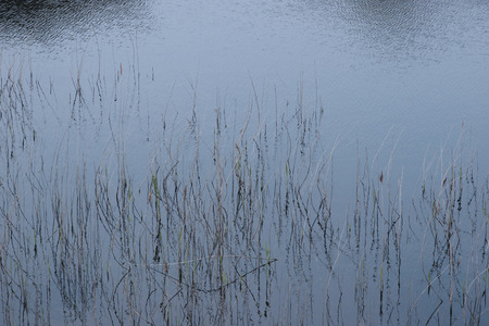 kerry: reflections of rushes on a lake