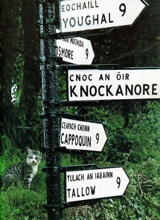 a cat at a sign post in ireland photo