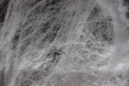 a lone spider weaving its tangled web photo