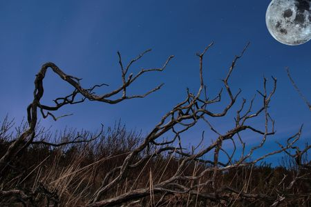 barren twigs on the shore of lake carragh in county kerry ireland under moonlight photo